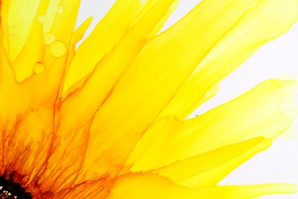 6x6 sunflower